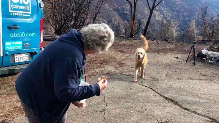 câine devodat