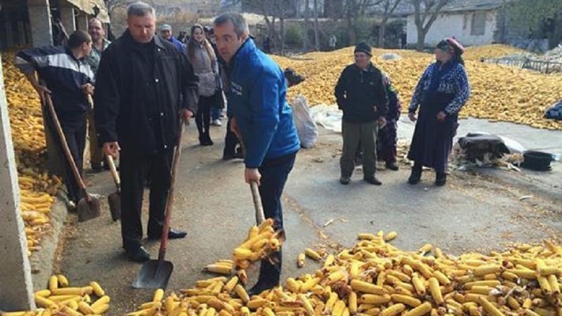 Sârbu muncitor   Sursa: pdm.md